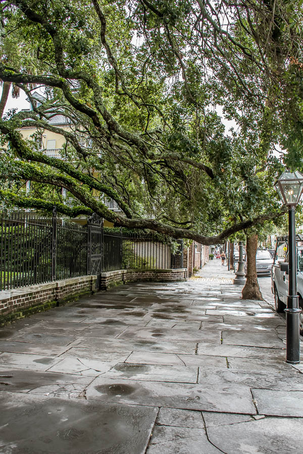 trees hanging over iron fencing charleston