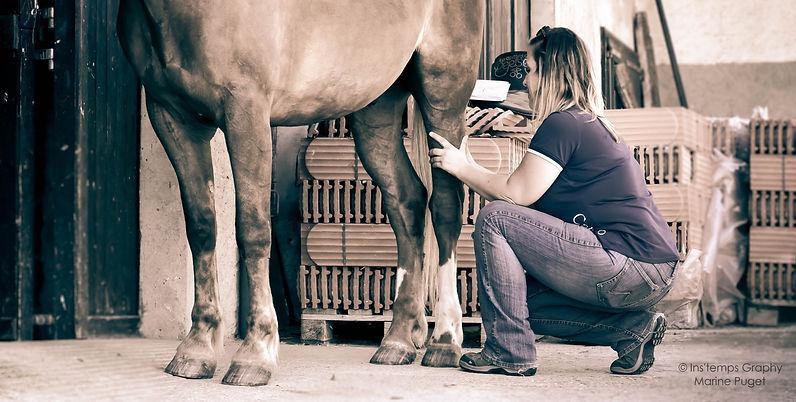 massage du cheval+massothérapie équine+concours+cheval de sport+détente musculaire+locomotion du cheval