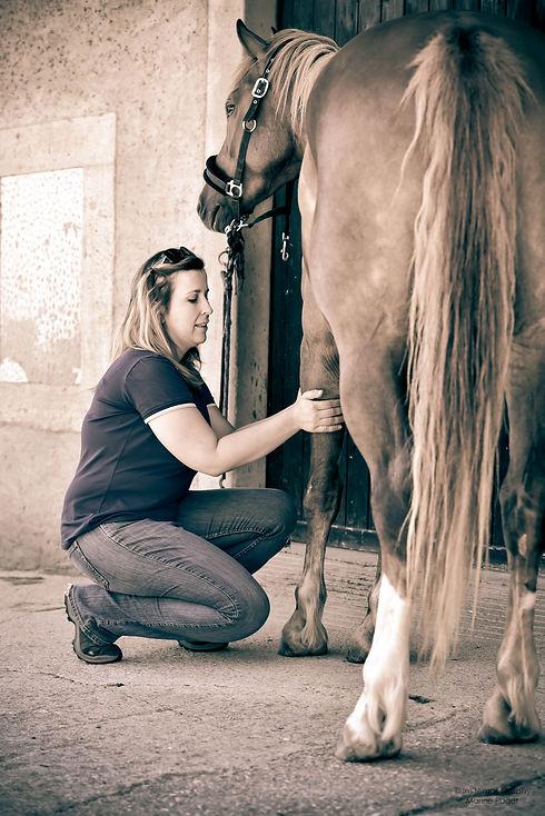 massage équin+massothérapie équine+massage du cheval+cheval de sport+cheval de loisir