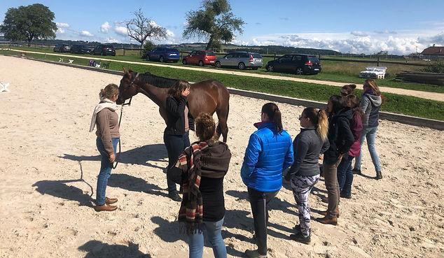 formations+saddle fitting+bien-être du cheval+locomotion du cheval+fey+vaud
