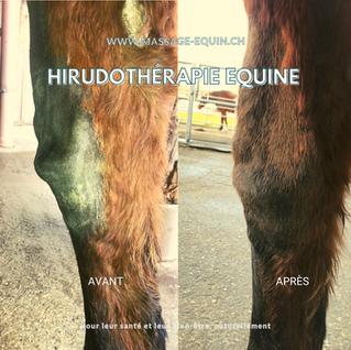 Qu'est-ce que l'arthrose et comment se traduit-elle chez le cheval ?