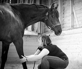massage cheval+stretching équin+détente musculaire+massage equin+cheval+suisse