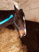 K-TAPE equin 2018 PARIS.jpg