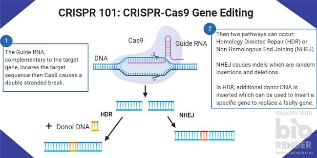CRISPR 1010 GENE EDITING.png