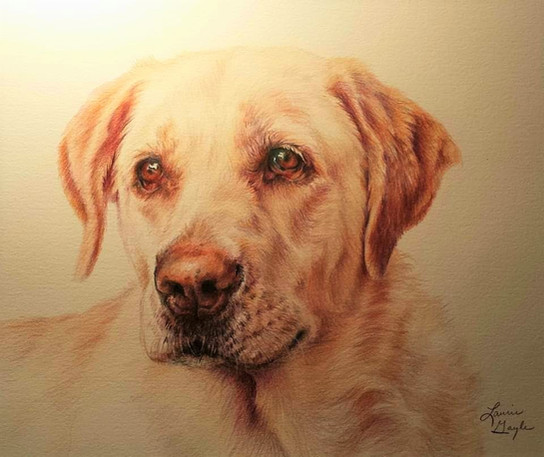 Yellow Lab-Dog Art, Drawing Laurie Gayle