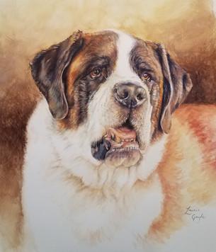 Buddy, Watercolor, 16x20.jp