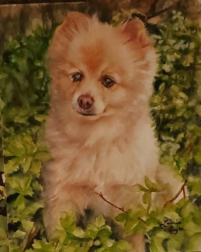 Samy, dog art, watercolor.jpg