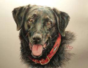 Star-Dog Art, Drawing.jpg