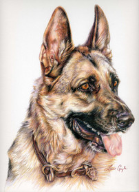 Jago-Dog Art, Drawing Laurie Gayle.jpg