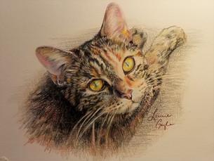 Woods- Cat Art, Drawing.jpg