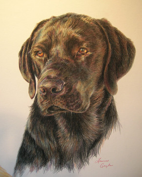 Dog Art- Black Lab Head, drawing.jpg
