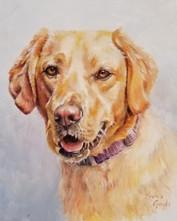 Sadie, Oil Painting, 11x14,