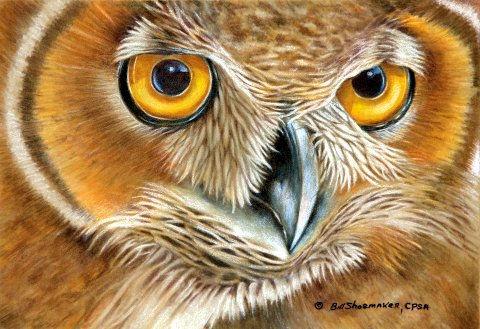 The Tiger Owl      6 x 9.jpg