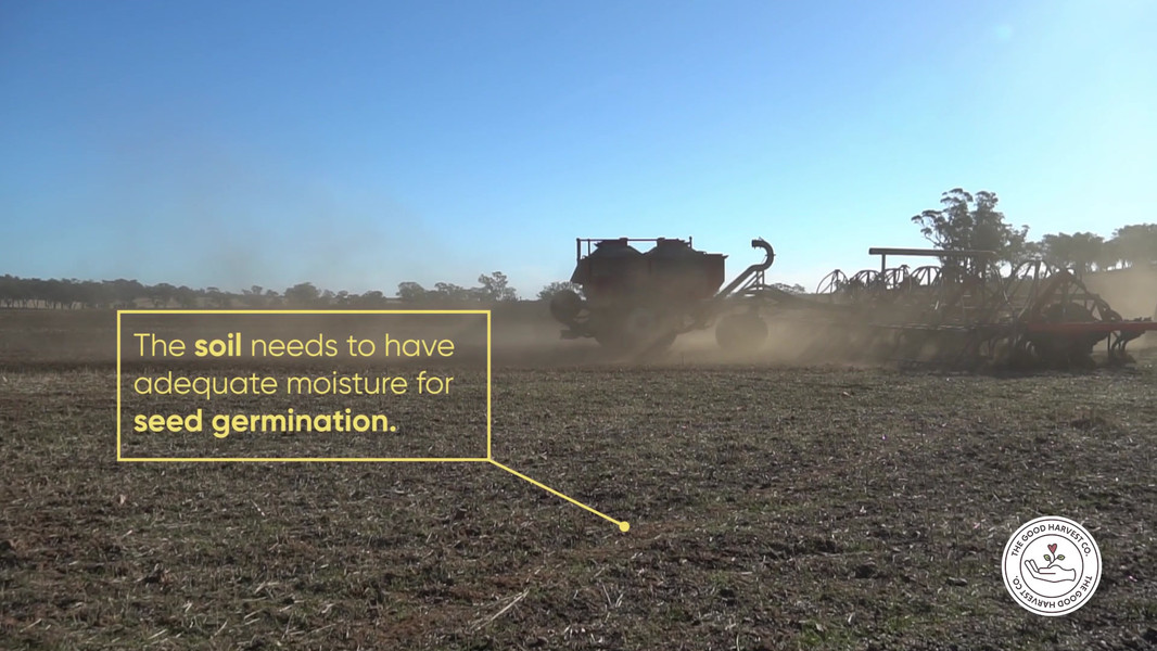 WATCH THE WHEAT GROWTH (SEED SOWING)