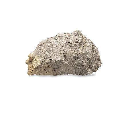 אבן מצלמת סוללה לשבוע