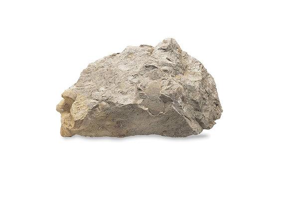 Doby אבן לשבוע