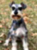 Georgie_edited.jpg