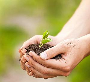 Stewardship 3.jpg
