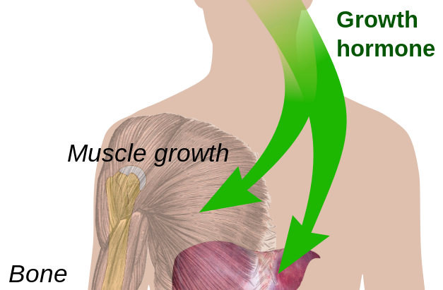Pituitary Gland Meditation - A Trusted Trick For Height Growth