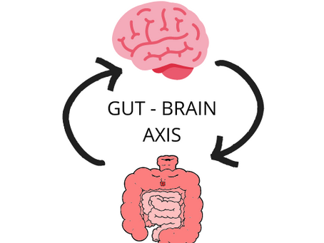 The Gut-Brain Connection: How The Gut and The Brain Talk to Each Other