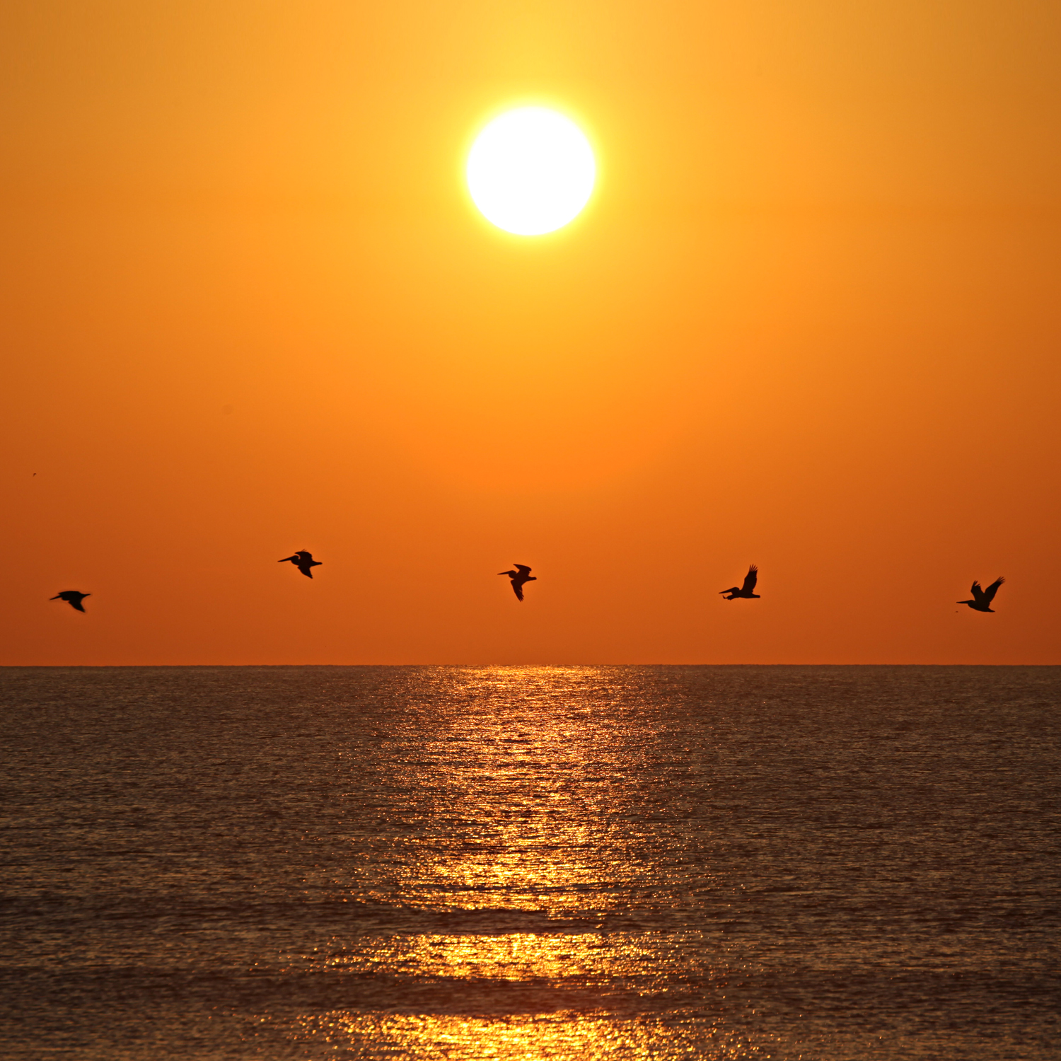 Sunset Birds Saint Augustine