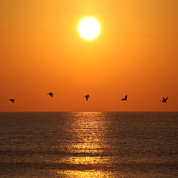 Sunset Birds Saint Augustine