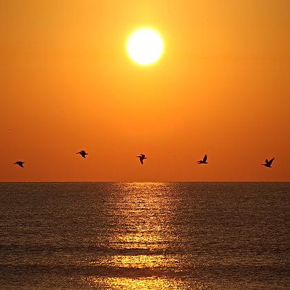 Sunset Birds Saint Augustine, Florida