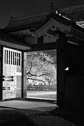 Open Door to Sakura-Mono, Odawara Japan