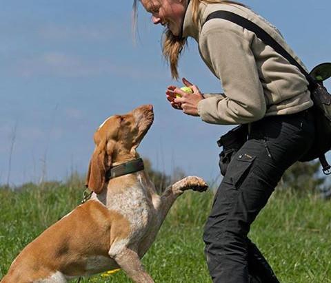 Træning af forskellige hunderacer