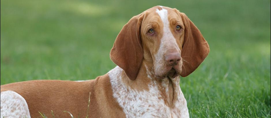 Opskriften på en lydig hund