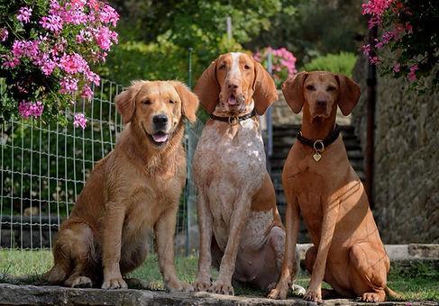 hundene.jpg