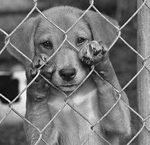 dog-dementia.jpg