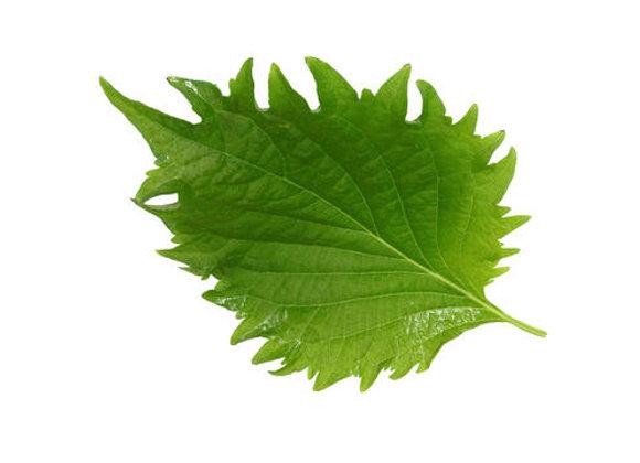 Shiso Leaves Verde