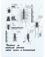 Taxonomy of Wildlife Spotted while Living in Quarantine