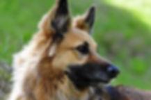 Canva - Photo of Dog.jpg