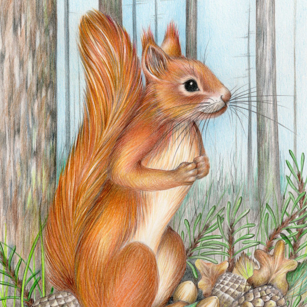 'Whiskers' from The Squirrel