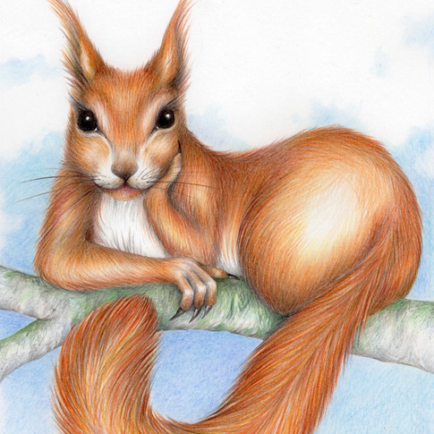 'Her Ladyship' from The Squirrel by Fiona Lunn