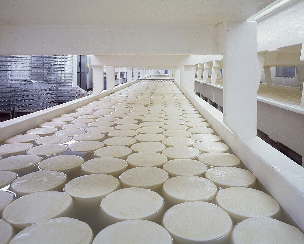 dairy production plant