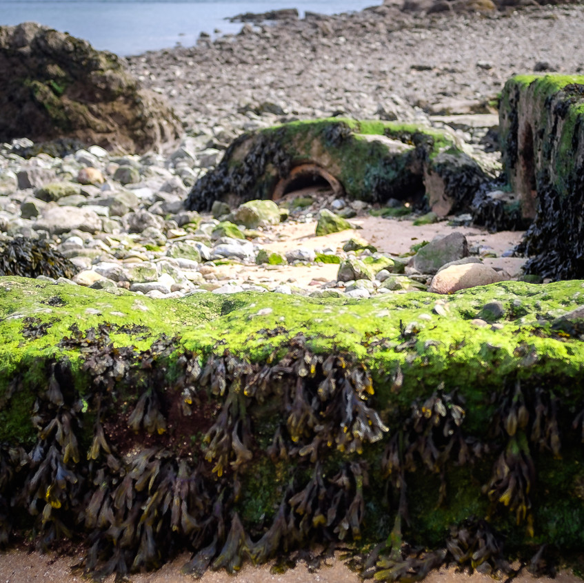 Mumbles Lighthouse in distance with seaweed-1