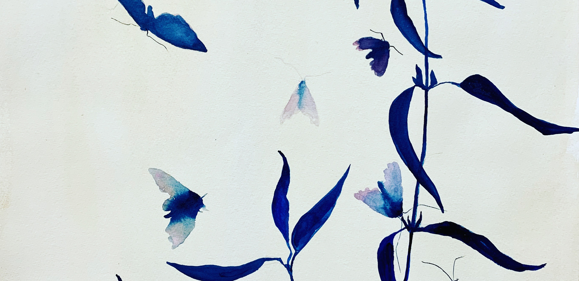 Moths Alight, 16x20, watercolor on paper, aluminum frame, $600