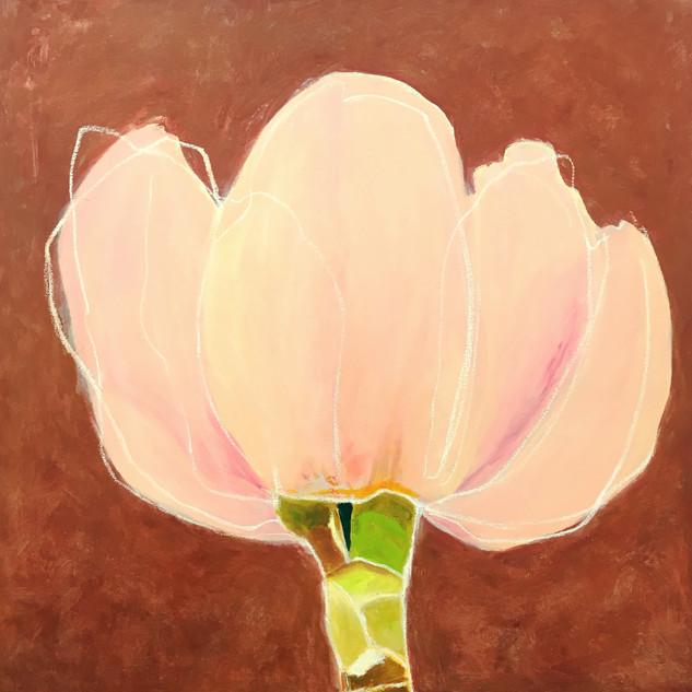 Magnolia, 36x36, oil on canvas