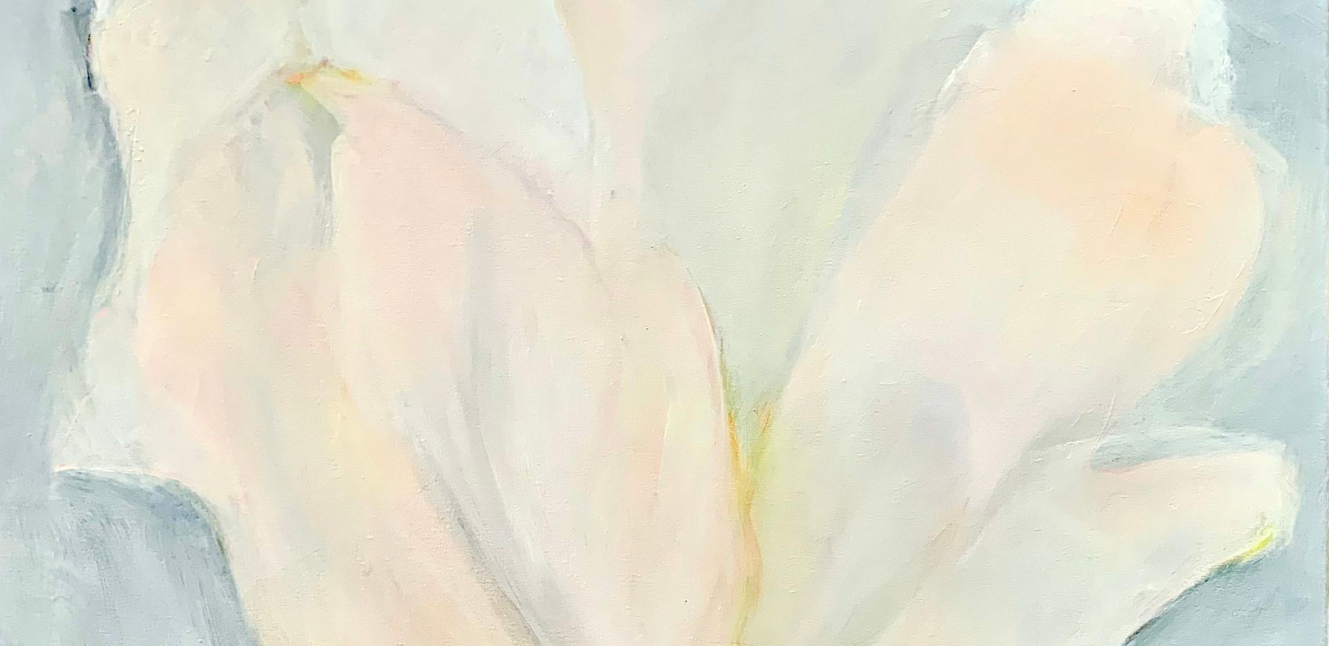 Winter White, 36x36, oil on canvas $1500
