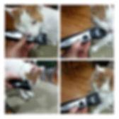 calgary cat grooming