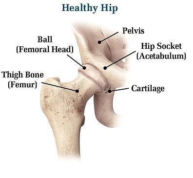 Healthy Hip.jpg