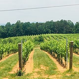 hgv-vineyard-picuture.jpg