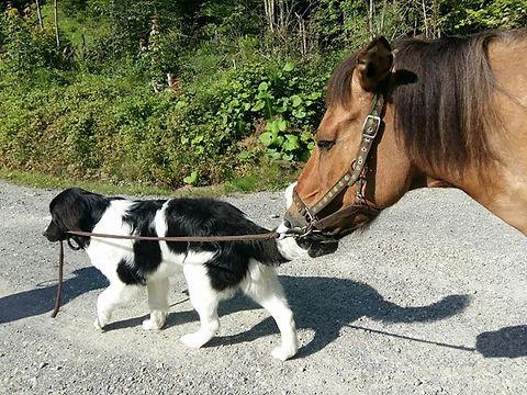 komm pferd lass uns spazieren😎.jpg