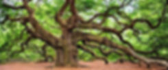 angel-oak-2018822_1280-e1496215498123-10