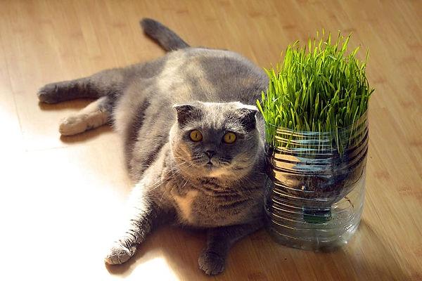fat-cat-lying-floor.jpg