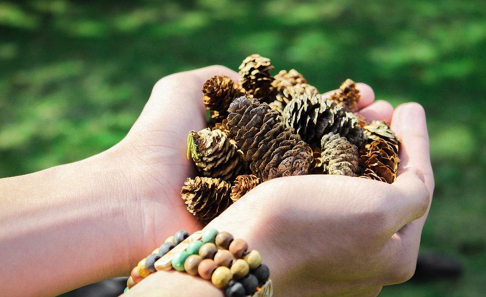 Canva - Pine Cones.jpg