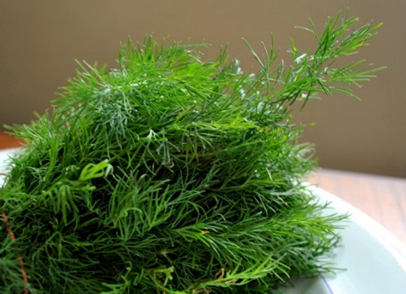 Dill - Fresh or Ground
